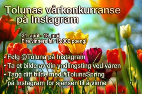 toluna-spring-NO